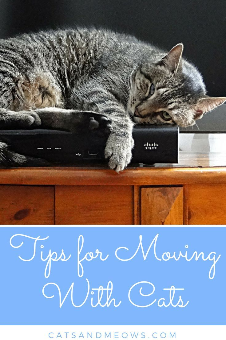 Tips For Moving With Cats Cat Training Cat Care Cat Training
