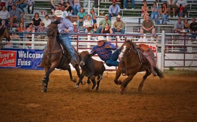 Bulldoggin The North Texas State Fair And Rodeo