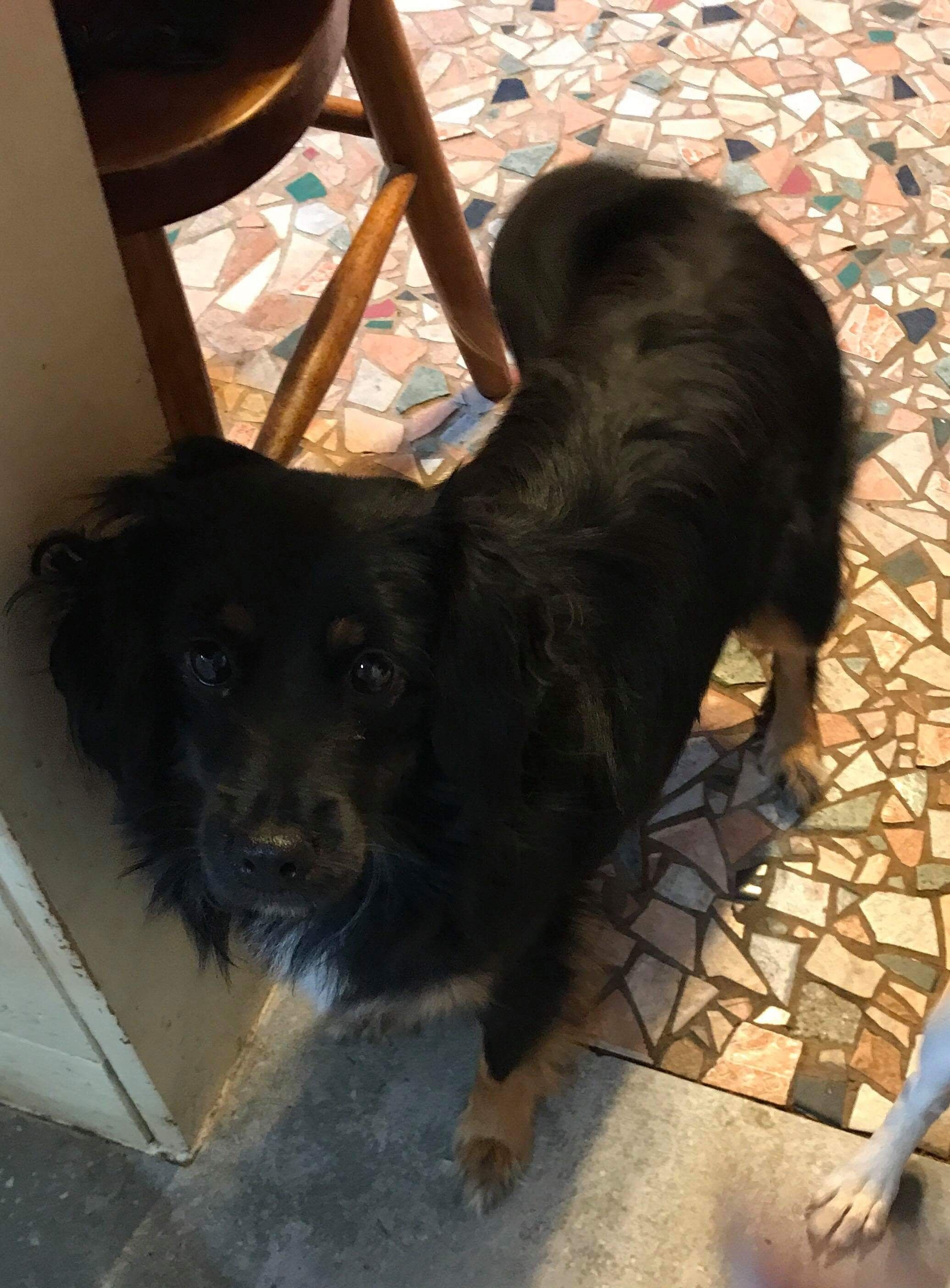 Adopt Sophie On Rescue Dogs Dogs Dachshund Dog