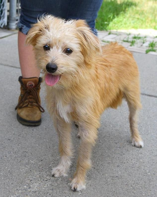 Adopt Brady on Terrier mix dogs, Animals, Terrier mix
