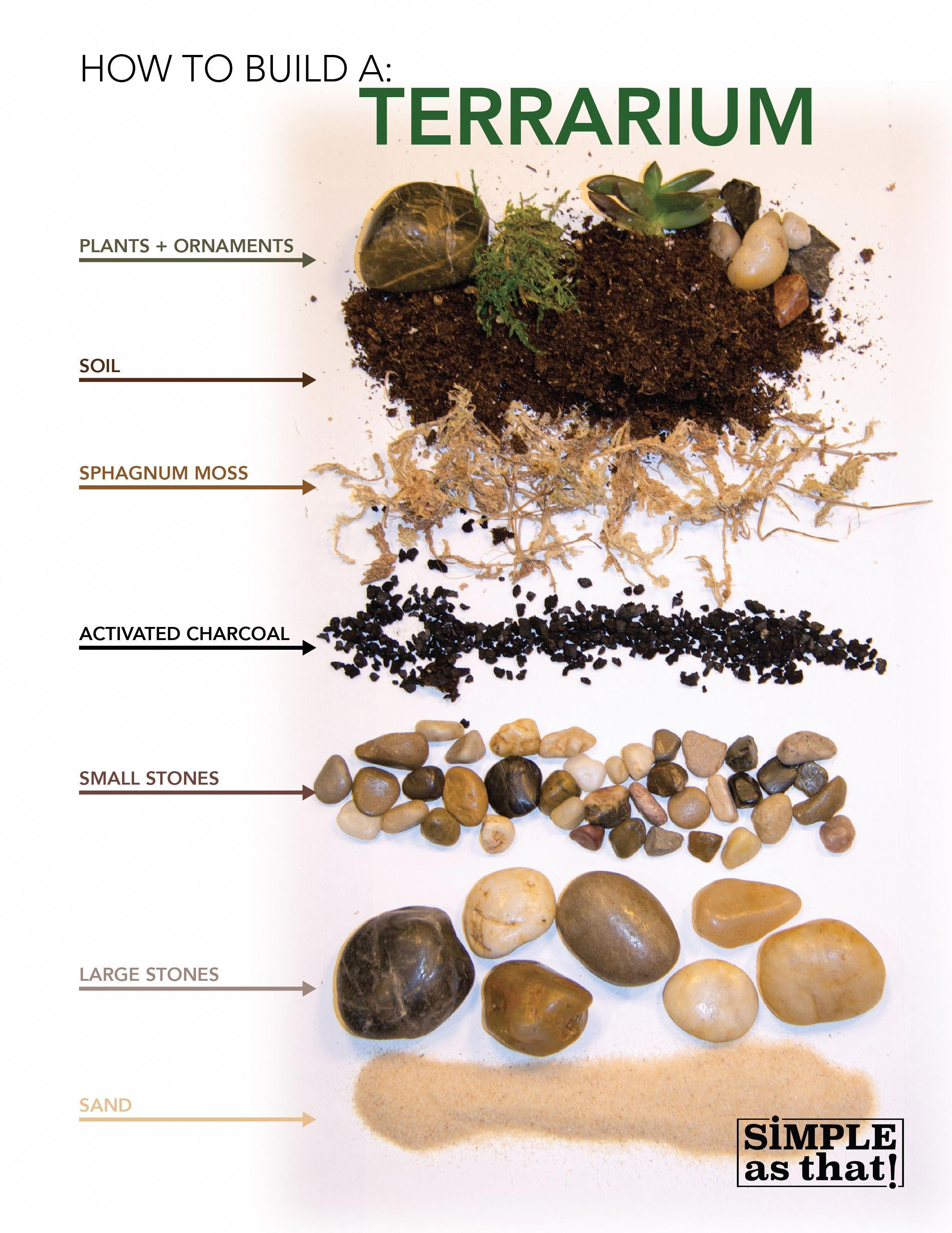 Photo of Learn how to build an indoor terrarium on Simple As That with host Andrea Keesee