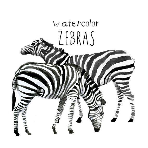 Watercolor Zebra Clipart Zebras Clip Art Commercial use