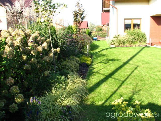 Raczkujący ogród Iwony - strona 92 - Forum ogrodnicze - Ogrodowisko