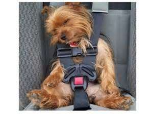 Sleeping Dog Funny Quotes Silly Dogs Sleeping Dogs Cute Animals