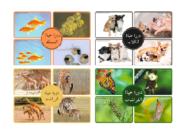 دورة حياة الحيوانات بزل مع ضابط خطأ علوم للأطفال In 2021