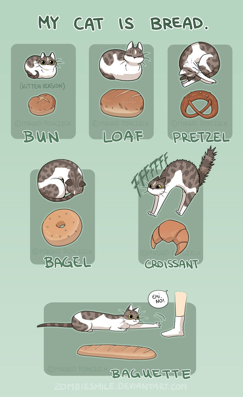 Cat Bread by Zombiesmile.deviantart.com on @DeviantArt