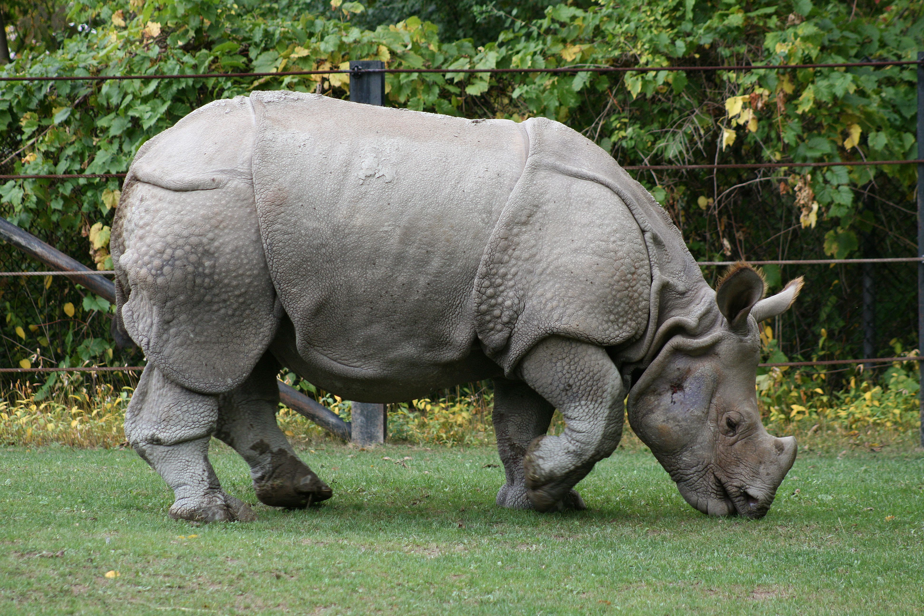 10 Most Endangered Animals in the World Most endangered