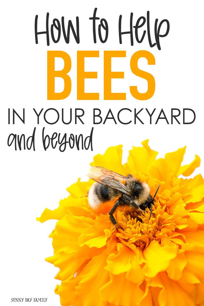 How to Help Bees in Your Backyard and Beyond   How to help ...