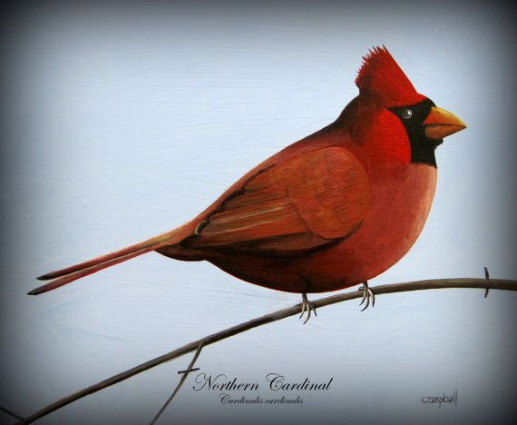 Northern Cardinal Giclee Print by Tim Campbell by TimCampbellArt