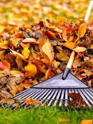 How to Prepare Your Lawn for Winter: Fall Lawn Care Tips