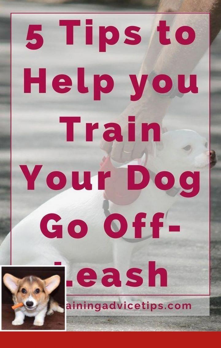Clicker Training Bad Behavior Dogtraining And Leashtraining