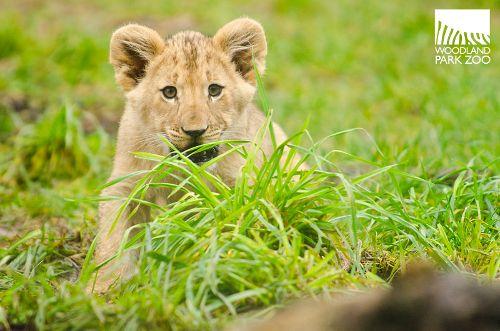 Sweet cub.