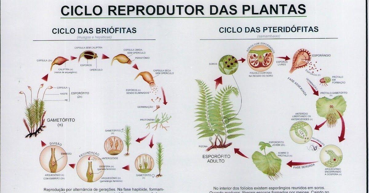 Reproducao Vegetal Atividades De Ciencia Para Criancas