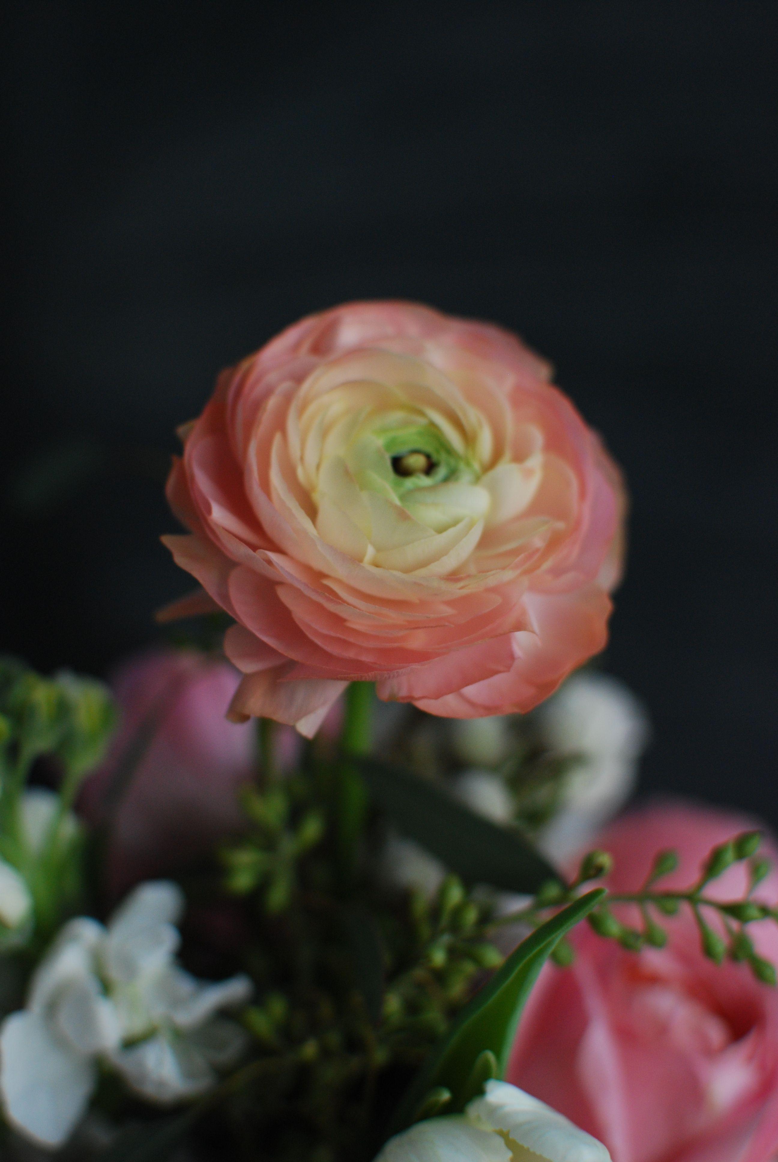 Salmon Ranunculus Victoryblooms Flowers Bloom Ranunculus