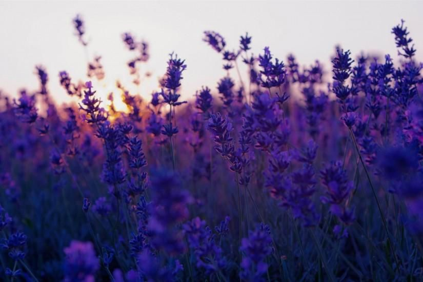 50 Computer Backgrounds Tumblr Download Free Hd Wallpapers For Desktop And Mobile Dev Flower Background Wallpaper Sunset Wallpaper Purple Flowers Wallpaper