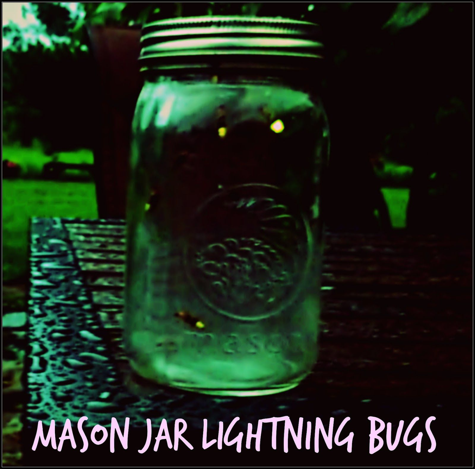 How to Catch Lightning Bugs pictures