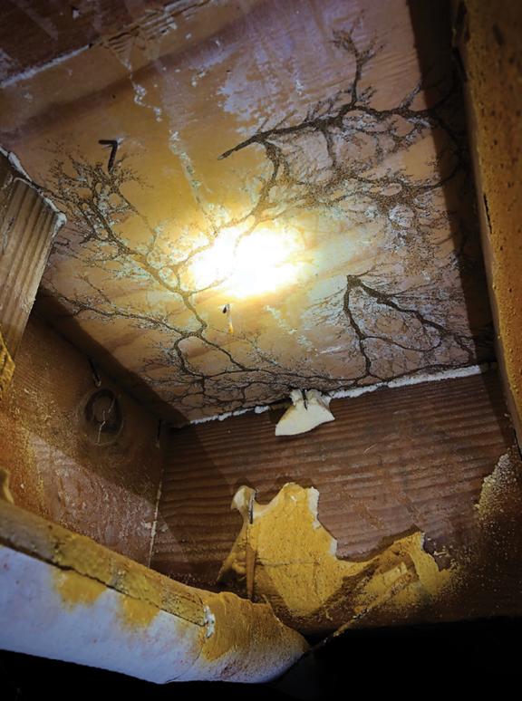 Foam Friend Or Foe Termite Control Best Pest Control Pest Control