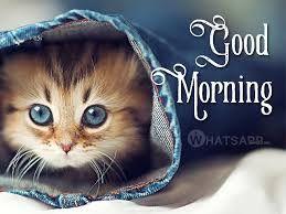 75 Funny Good Morning Memes To Kickstart Your Day Funny Good Morning Memes Funny Good Morning Images Morning Memes