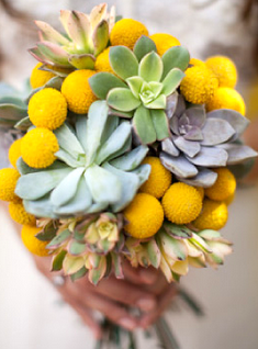 Billy balls succulents these are those yellow ball flowers i billy balls succulents these are those yellow ball flowers i was talking about would look so cute with lilac colored flowers mightylinksfo