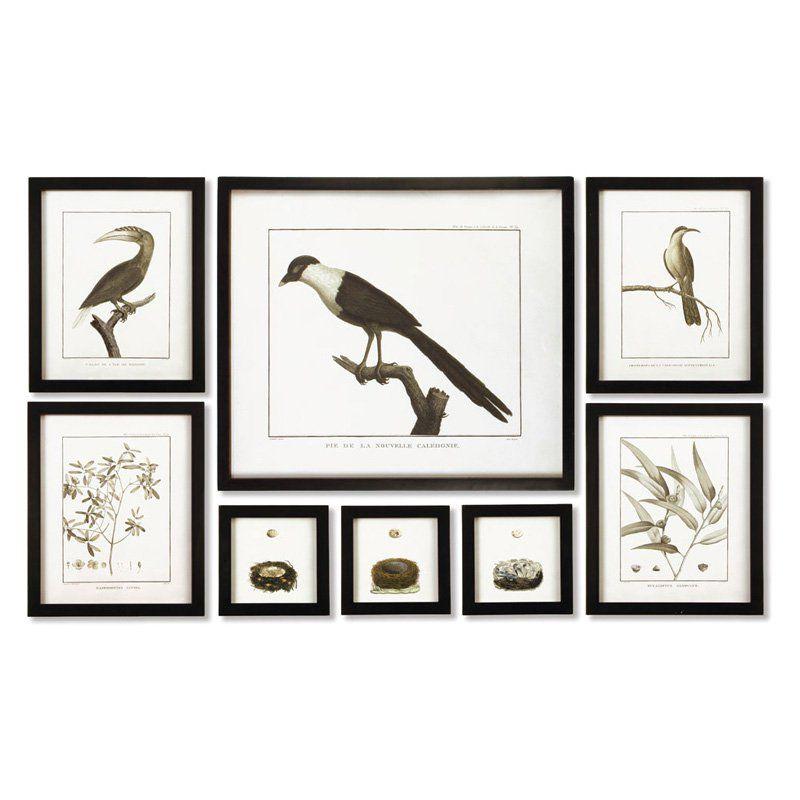 Napa Home and Garden Framed Audubon 8 Piece Print Wall