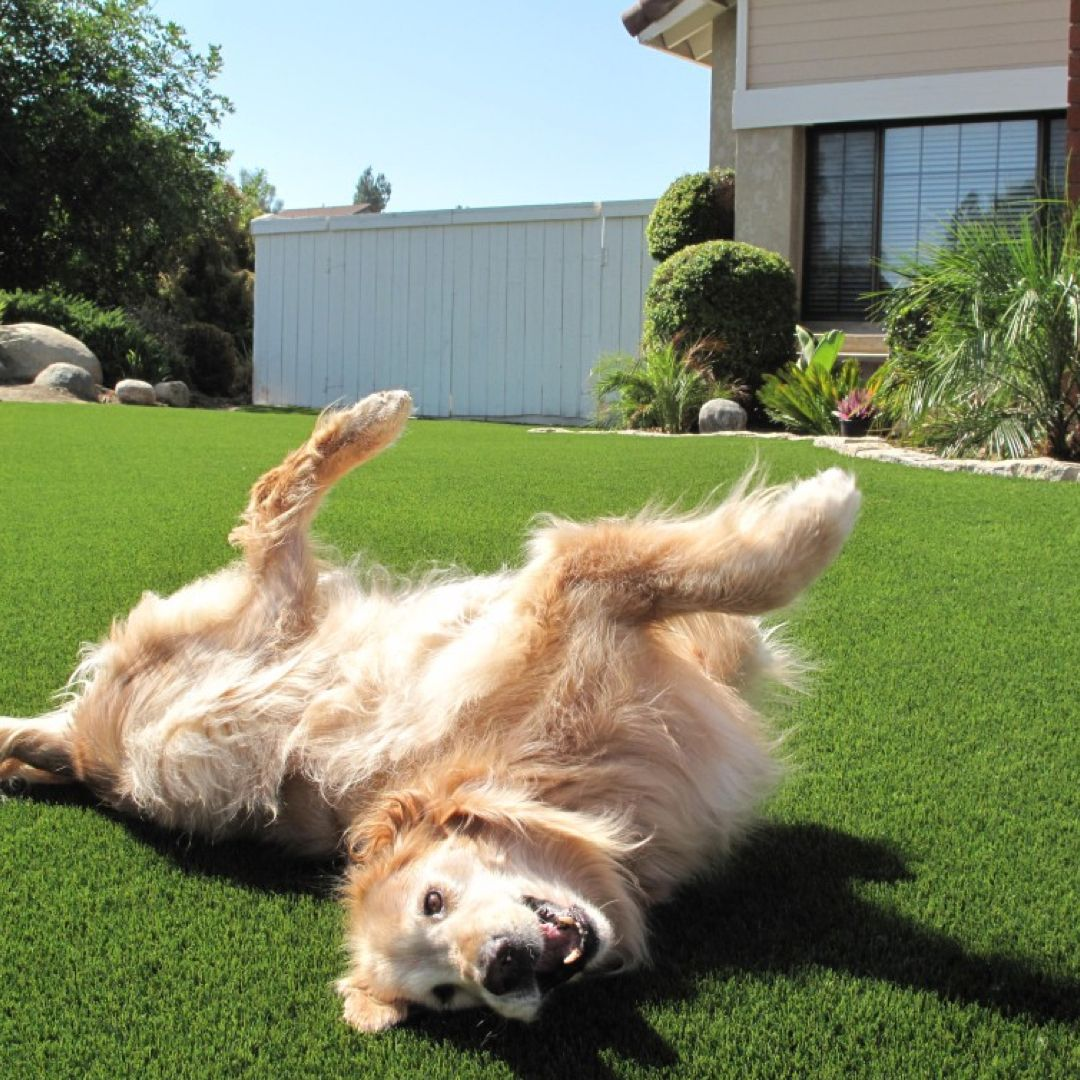 your pets will love our artificial grass it will result in a nice