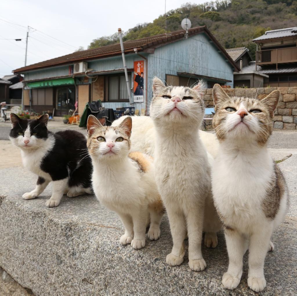 大集合して「ご飯下さい光線」を発する猫たち