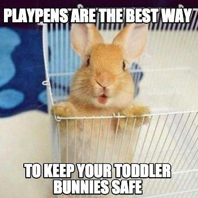 Playpens Are Great For Toddlers Of All Species Rabbit Bunny Bunnies Cuteanimal Pet Cute Baby Bunnies Cute Baby Animals Cute Animals