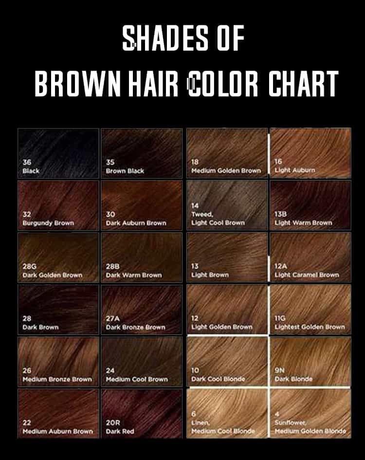 Shades of brown hair color birthday hair brown hair shades