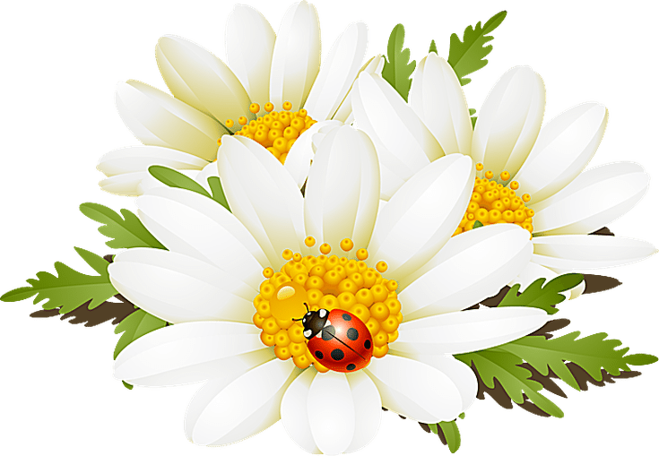 Grab This Free Summer Flower Clip Art: Daisies and a Ladybug