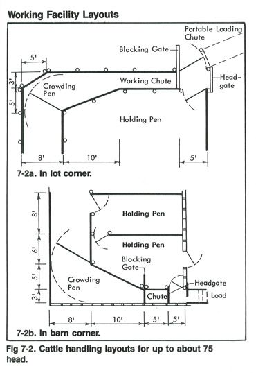 diagram of cattle handling layouts for up to 75 head. Black Bedroom Furniture Sets. Home Design Ideas