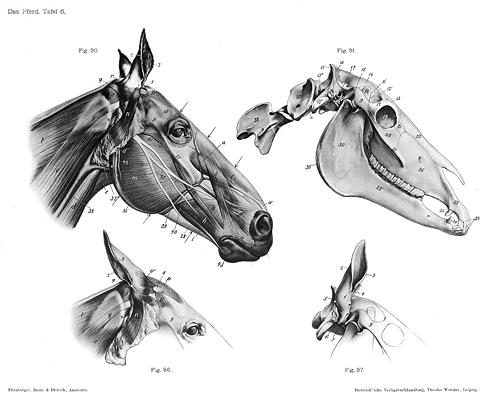 Pin de Manuel Valles Plasencia en Dibujo naturalista y anatoma
