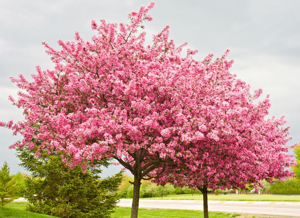 10 Of The Best Trees For Any Backyard Backyard Trees Eastern