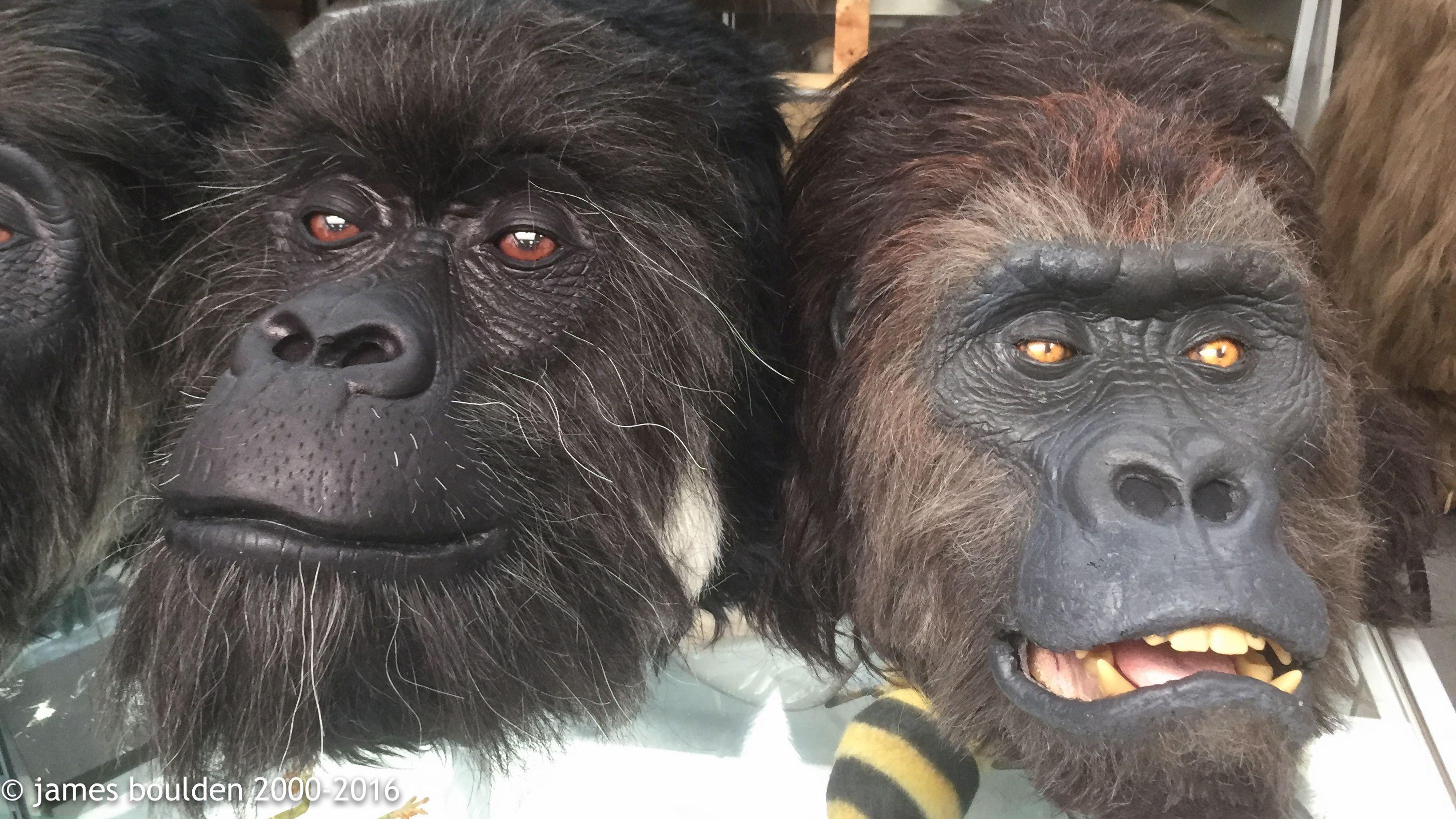 Chimp Mask Monkey Chimpanzee Arms Hands Planet Apes Animal Fancy Dress Costume