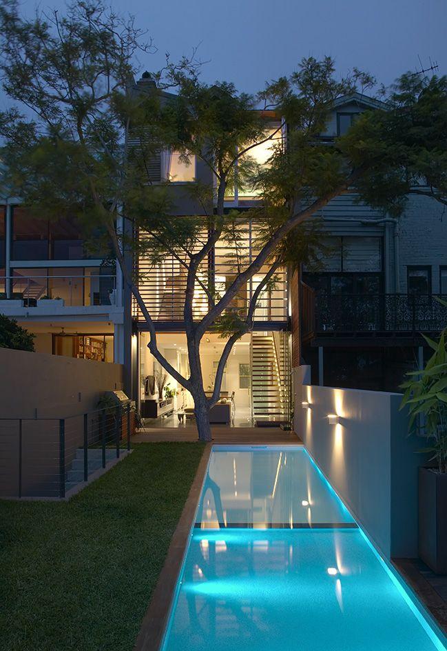 Modern House Courtyard Lap Pool Jacaranda Feature Tree