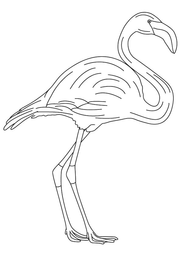 Print Coloring Image Momjunction Flamingo Coloring Page