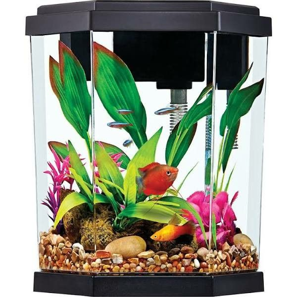 2 Gallon Fish Habitat With Filter Perfect For Small Fish Aquarium Kit Pet Spray Aquarium