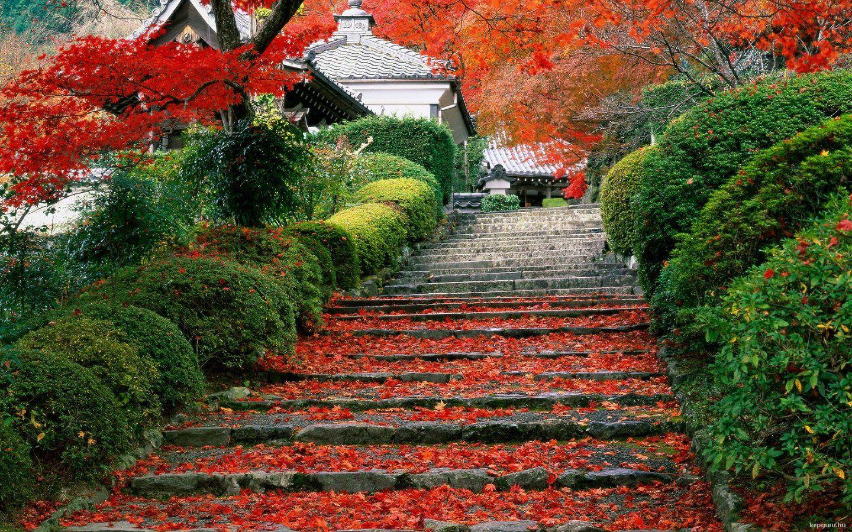 Kyoto Japon Kepguru Hu Images Jardin Japonais Japon Paysage Paysage Automne