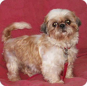 Pin By Anita Salas On Can You Help Shih Tzu Shih Tzu Rescue Pets