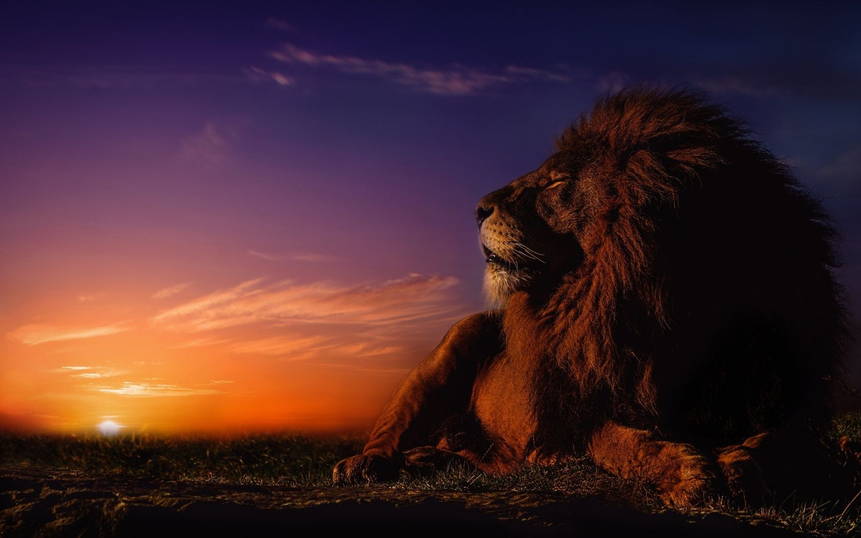 1680x1050 Beast Relaxed Lion The Big Cat Wallpaper Cat Wallpaper Animal Wallpaper Big Cats