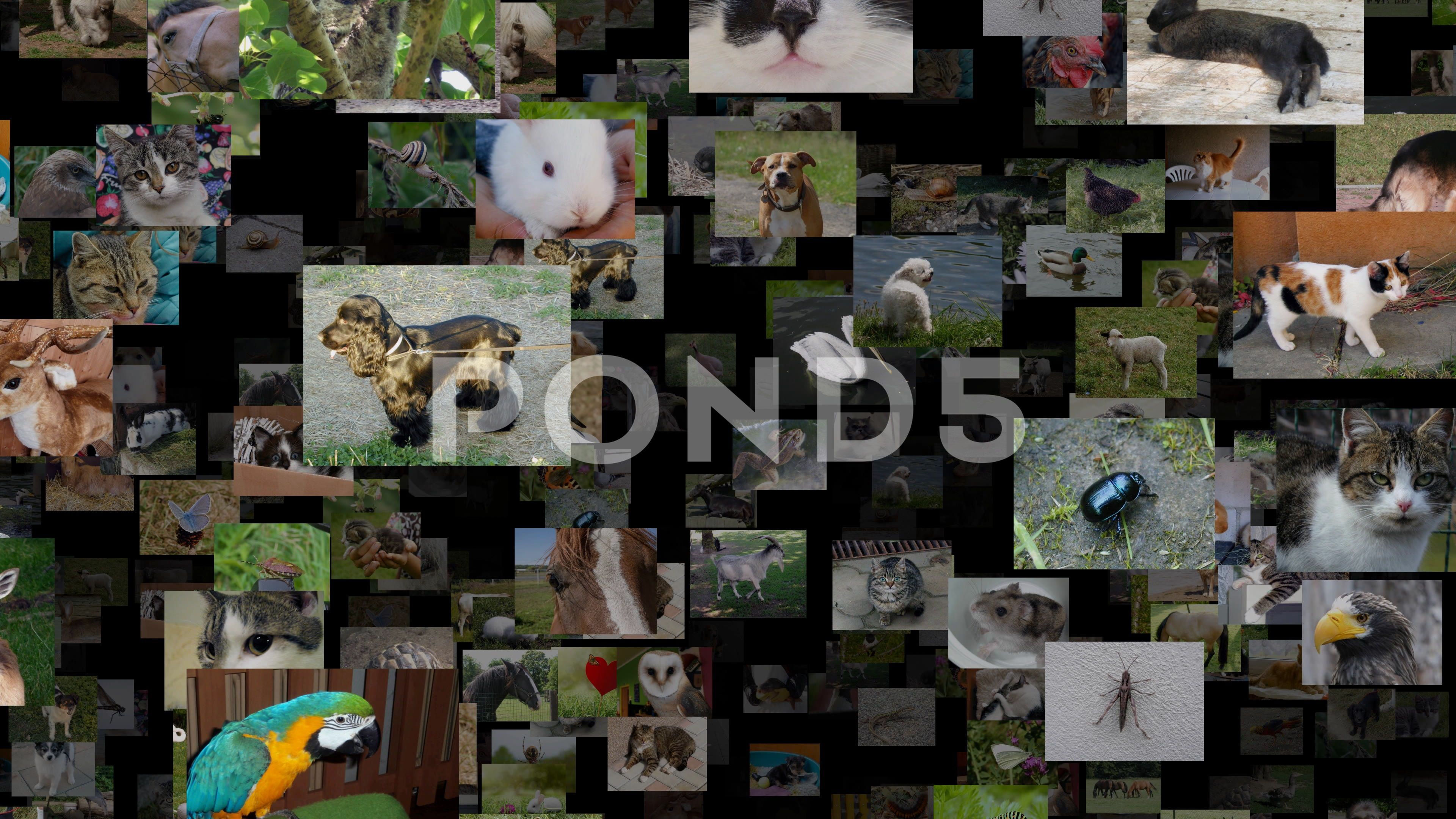 Photo stream of animals moving RIGHT, seamless loop Stock