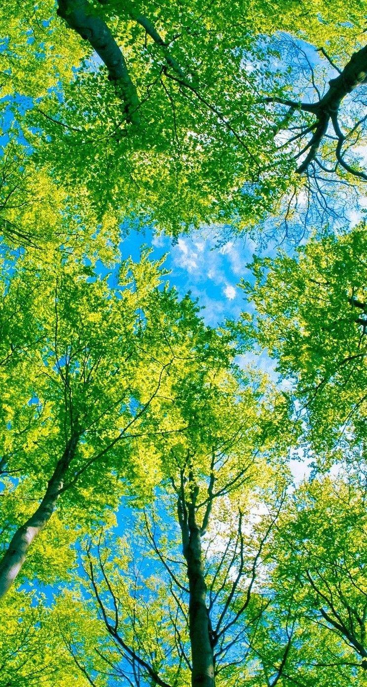 人気49位 木漏れ日 木の壁紙 緑 壁紙 木の写真