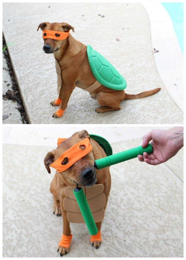 Dog Halloween Costumes Ninja Turtle Dog Outfit Tap The Pin For