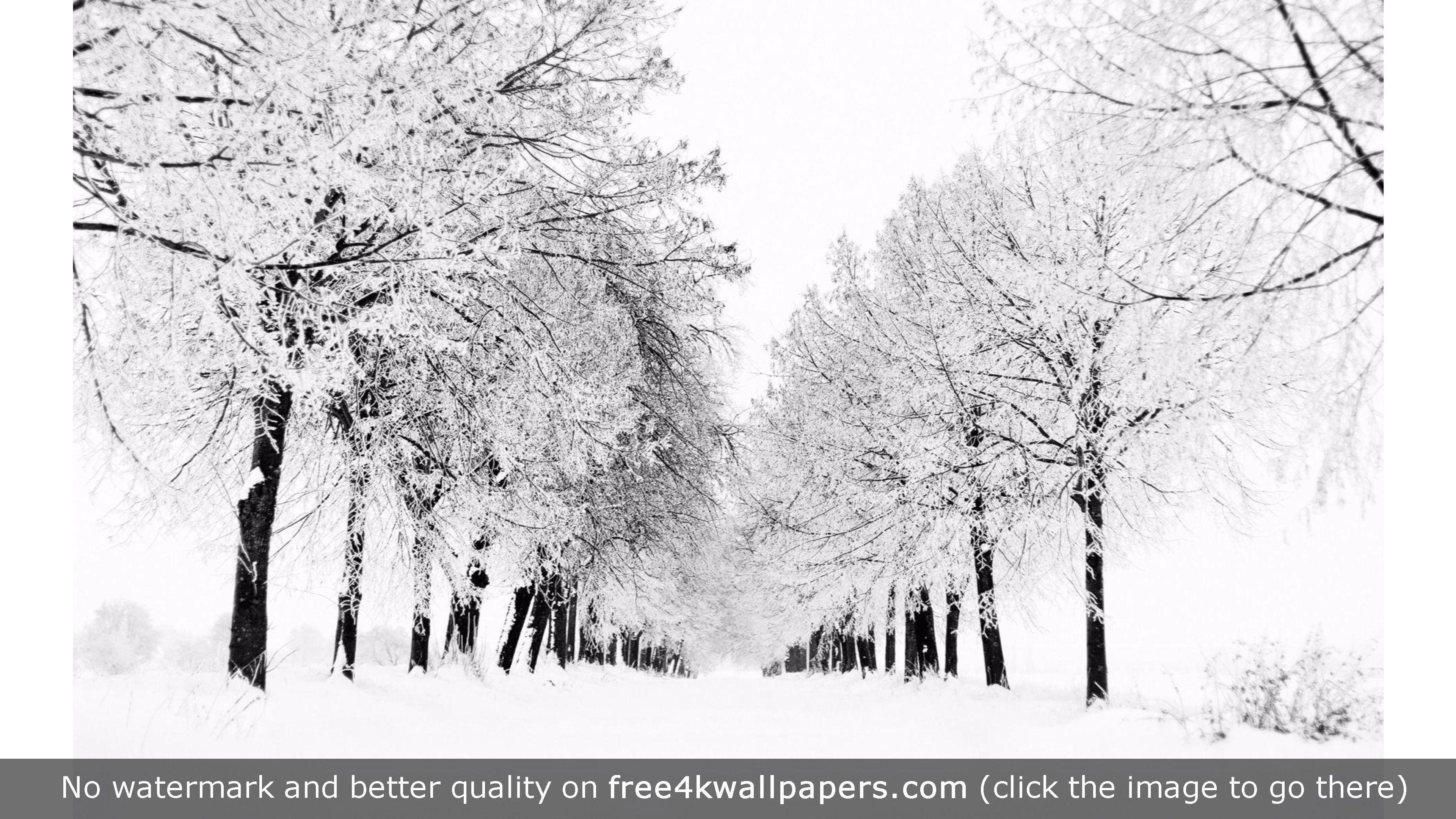 White Winter 4k Wallpaper Winter Snow Photography Winter Wallpaper Winter Wallpaper Desktop