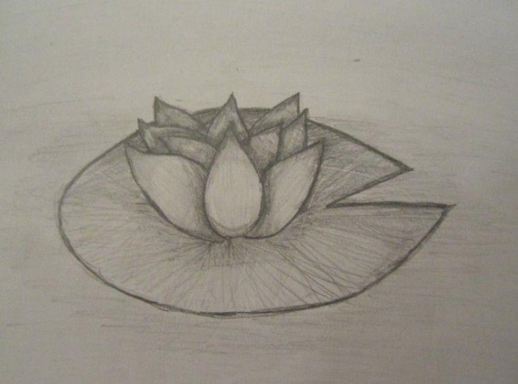 Foto Bunga Yg Mudah Digambar 39 Gambar Sketsa Bunga Indah Sakura Mawar Melati Matahari Contoh Gambar Flower Illustration Hummingbird Sketch Flower Sketches