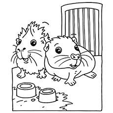 guinea pig coloring page # 1