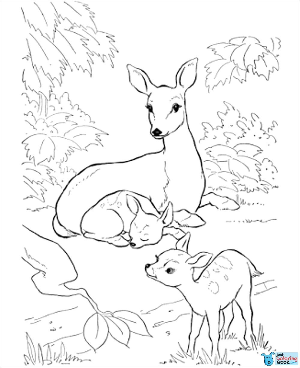 Coloring Pages Of White Tailed Deer Nobelpaper Co In Printable