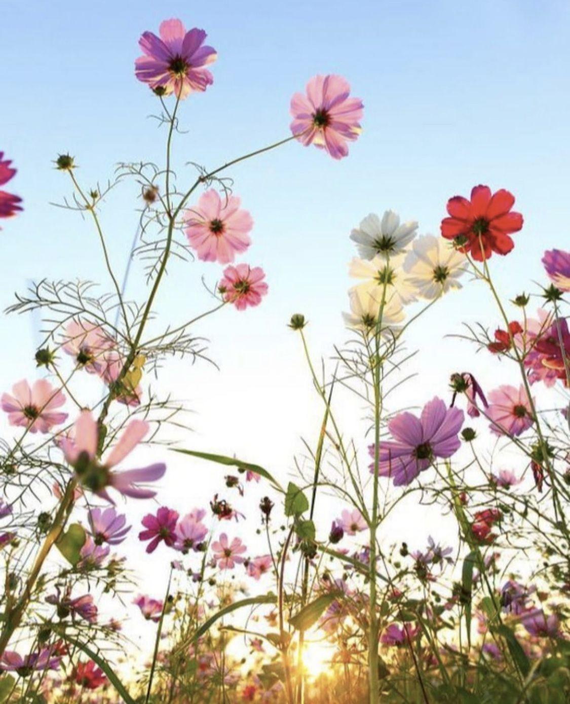 Epingle Par Sainchris Sur Paysages En 2020 Photo Fleurs Fond D Ecran Abstrait Photo Magnifique