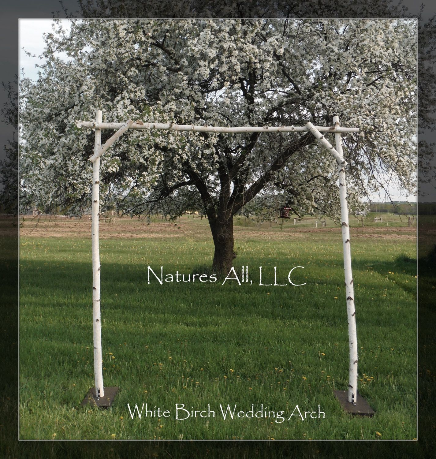 DIY White Birch Wedding Arch Kit For Indoor Or Outdoor Weddings Item