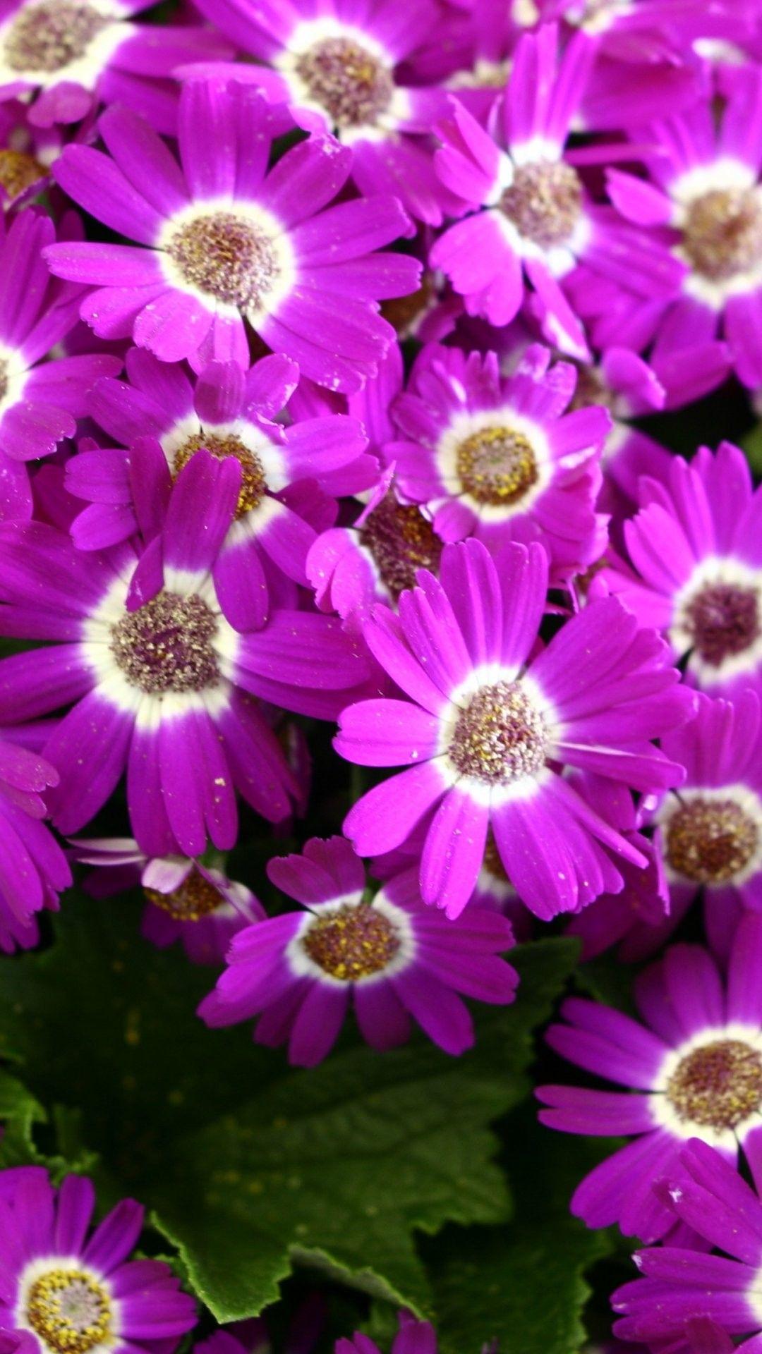 Spring Flowers iPhone 6 Plus Wallpaper 14129 Flowers