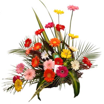 Guatemala Florales Vogue Gerberas Revistero De Gerberas